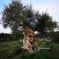 Ginosa & Dintorni Fotografando Con Cuore Provetto di Giovanni Ranaldo